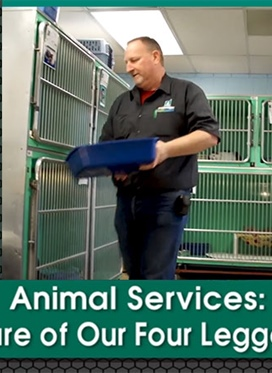 Animal Services: Taking Care of Our Four Legged Friends