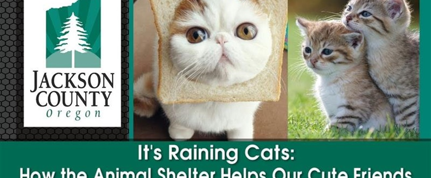 It's Raining Cats: How the Animal Shelter...