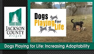 Dogs Playing for Life:  Increasing Adoptability