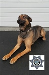 JCSO K9 to Receive Body Armor (Photo)