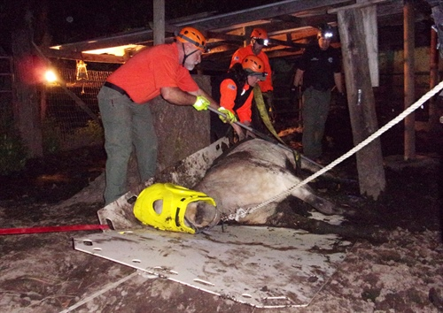 JCSO SAR to Host Large Animal Rescue Class