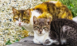 Stray & Feral Cats