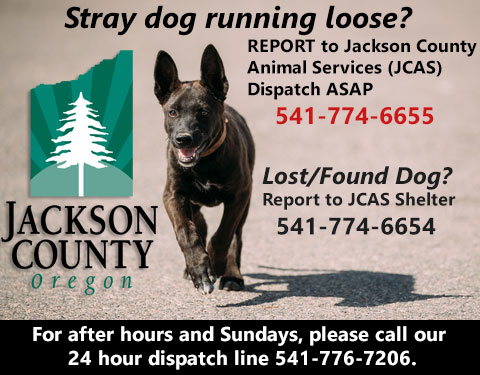 Stray dog call Animal Services to report 541-774-6655