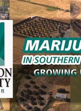 JC Potpourri: Marijauna in Southern Oregon - Growing Pains