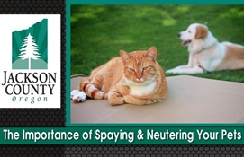The Importance of Spaying and Neutering Your Pets