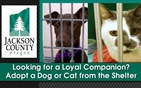 Adopt a Dog or Cat from the Animal Shelter