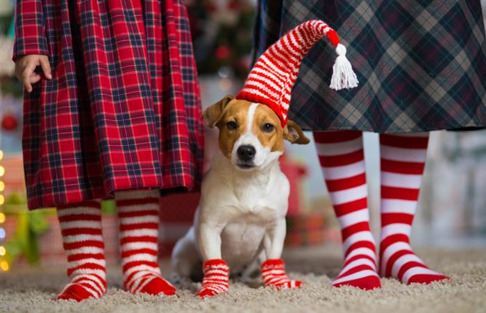 Keeping your kids and pets safe during the holiday season