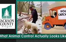 What Animal Control Actually Looks Like