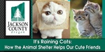It's Raining Cats: How the Animal Shelter Helps Our Cute...