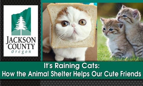 It's Raining Cats: How the Animal Shelter Helps Our Cute Friends