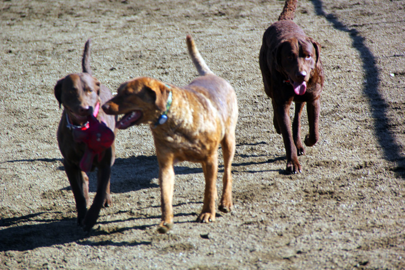imgSO RV Park is a dog friendly park featuring a small, fenced, off-leash dog run.