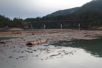 Forest Debris Scattered Throughout Lost Creek Lake