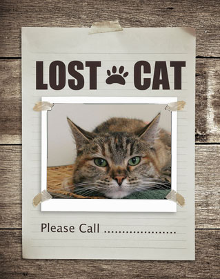 how to tell if a cat is lost