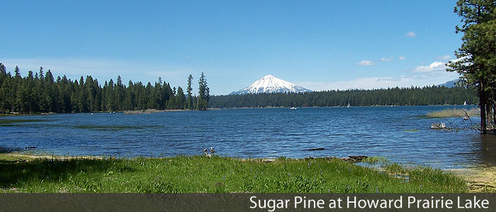Sugar Pine at Howard Prairie Lake